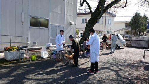 昭島市狂犬病集合接種のサムネイル画像